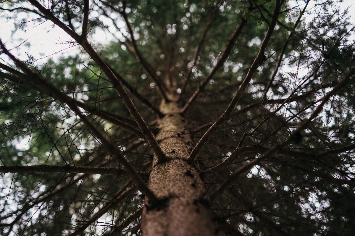 Drzewo wysoko w gorach