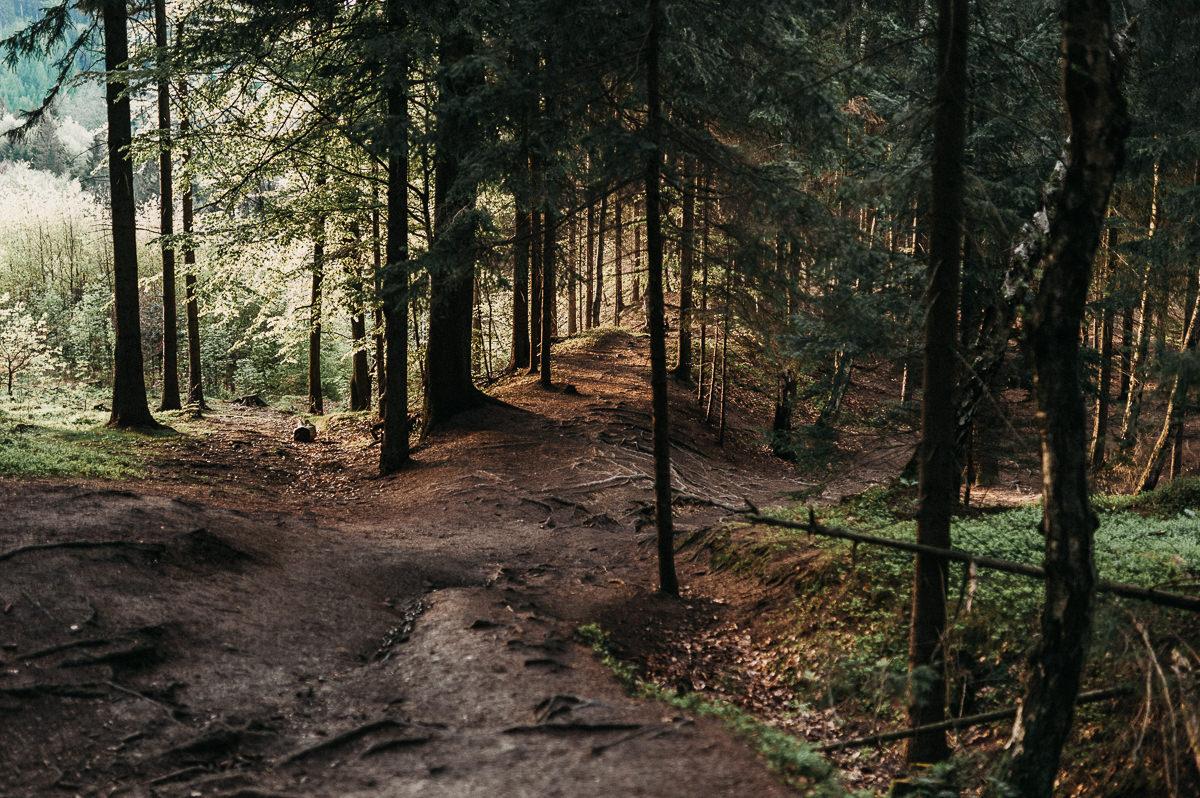 Klimatyczny las w Karkonoszach