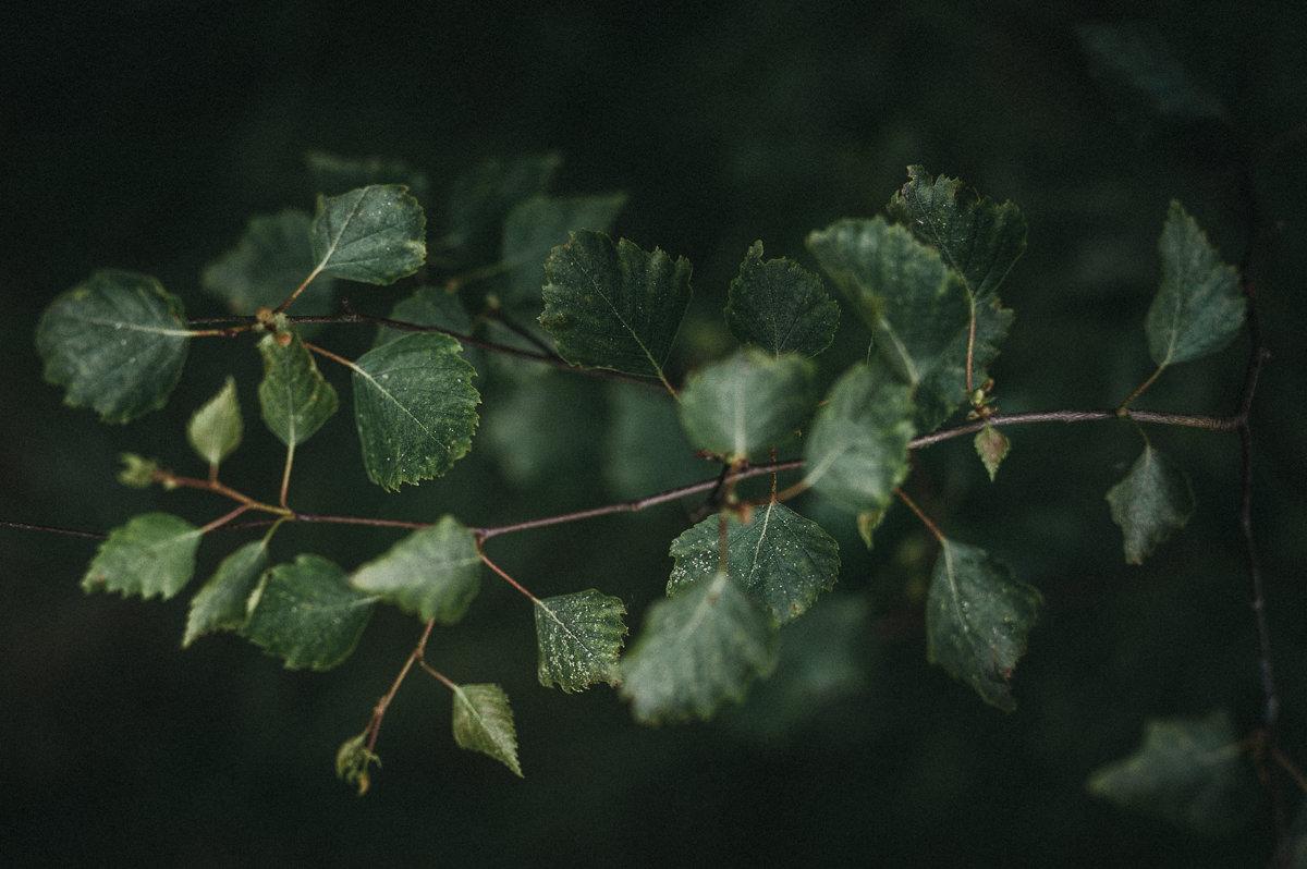 Zielone liscie drzewa w lesie