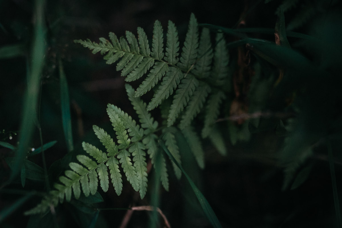 Paproc na lesnej sesji slubnej