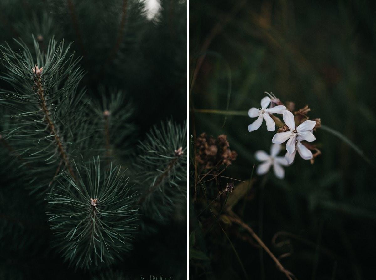 Drzewo iglaste i kwiatek na sesji narzeczenskiej