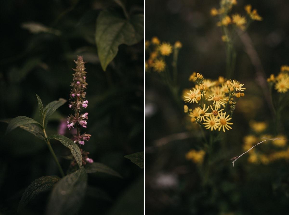 Zolte kwiaty na polanie