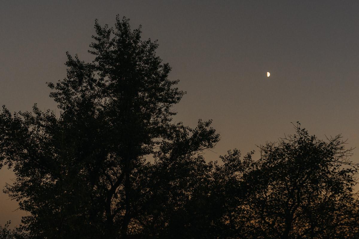 Drzewa na tle ciemnego nieba w blasku ksiezyca